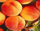 photo of fresh ripe peaches a good natural source to avoid vitamin deficiency