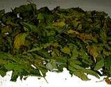 photo of organic catnip leaves drying to make catnip tea
