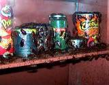 photo of a cupboard with cans of food infested with cockroaches