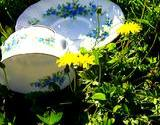 photo of a teacup and saucer sitting in a field of dandelions it must be time for dandelion tea