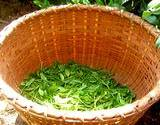 photo of a basket with green tea leaves in the bottom