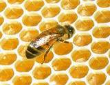 a busy bee working away at it's honeycomb
