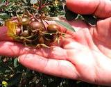 photo of a man's hand holding fresh rose hips