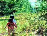 allergy example children walking through a meadow