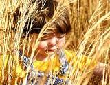 young boy in wheat field