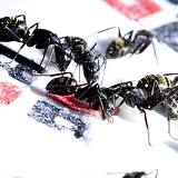 photo of a group of ants sitting on a table cloth looking for food