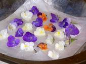 photo of a plate of edible candied pansies in a variety of colors