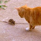 photo of a cat and mouse seeing eye to eye on a sidewalk