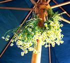 photo of bundles of incredible chamomile hanging upside down for drying