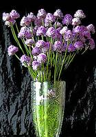 photo of a bouquet of lavender chives arranged in a glass vase