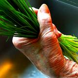 photo of a woman's hand holding a chives bunch for ailments and treatments