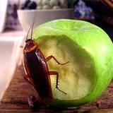 photo of a cockroach eating a green apple
