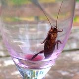 photo of an empty wine glass with a cockroach inside taking a sip