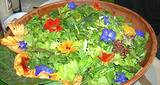 photo of a large bowl salad made from edible flowers and herbs