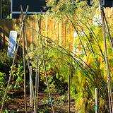 photo of an herb garden with mature fennel seeds