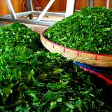 photo of piles of green tea leaves