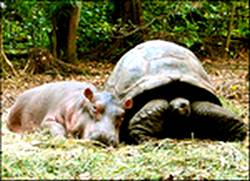 best friends tortoise and rhino resting together