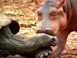 rhino givng tortoise a kiss