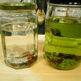 photo of 2 jars of homemade clove infusion