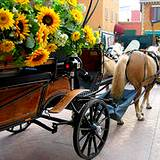 an italian horse and wagon loaded with sunflowers