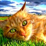 A big beautiful red tabby cat with big green eyes contently laying in the grass after using a natural flea pest control remedy