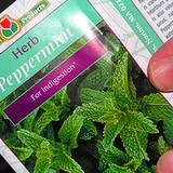 photo of a packet of peppermint seed ready to plant to make peppermint tea