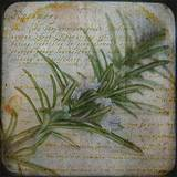 photo of a journal full of herbal wisdom with a sprig of rosemary