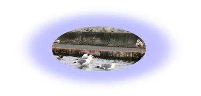 sea gull bird bath