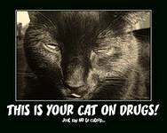 photo of a black cat stoned on catnip with a sign saying