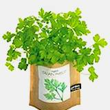 photo of a bag full of parsley